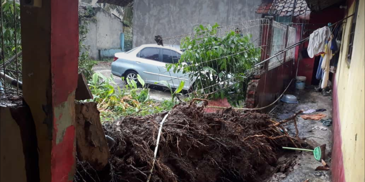 Rumah Warga Tertimpa Pohon, Hati-hati Saat Hujan Deras